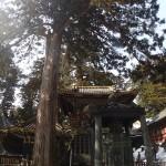 日光-日光東照宮内の立派な木&謎の建物