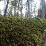 日光-200段の階段脇の苔