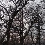戦場ヶ原脇の木々