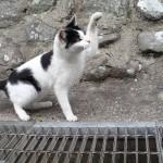 猫パンチw