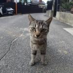 さっきの猫