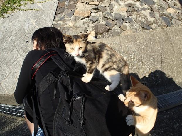 よじ登る子猫w